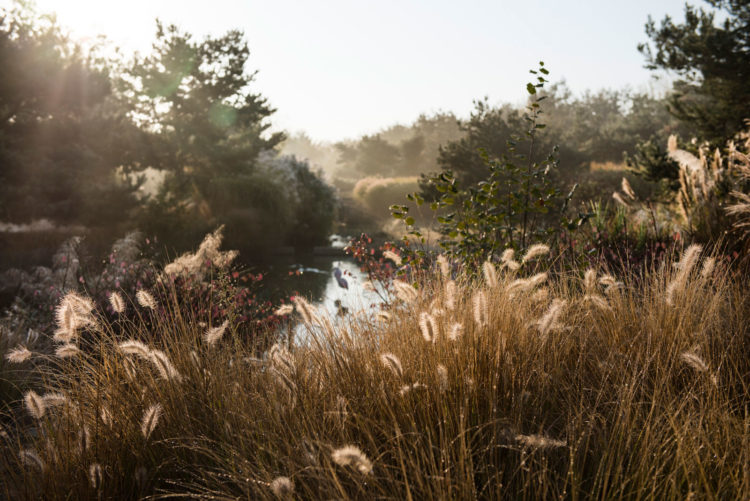 La réserve du Parc des oiseaux