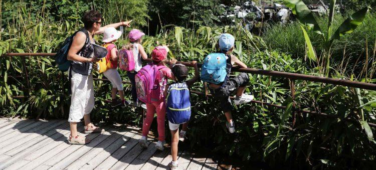 Sortie visite scolaire volière jungle tropicale